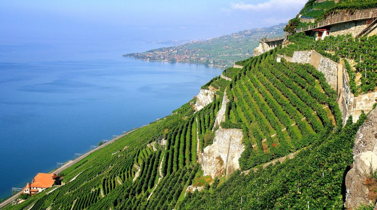 Vignoble-Lavaux-Switzerland